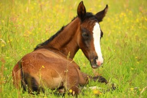 caballo dormido